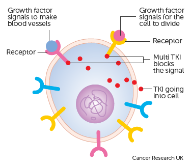 example of renshaw cell in action
